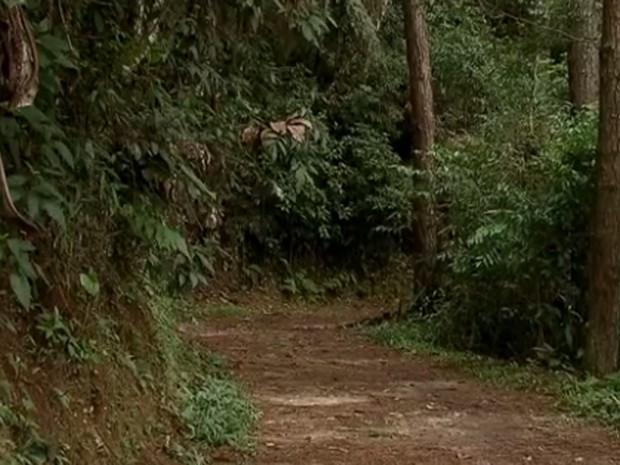 trilha Parque Estadual da Cantareira